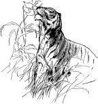 Tiger Smelling Flower