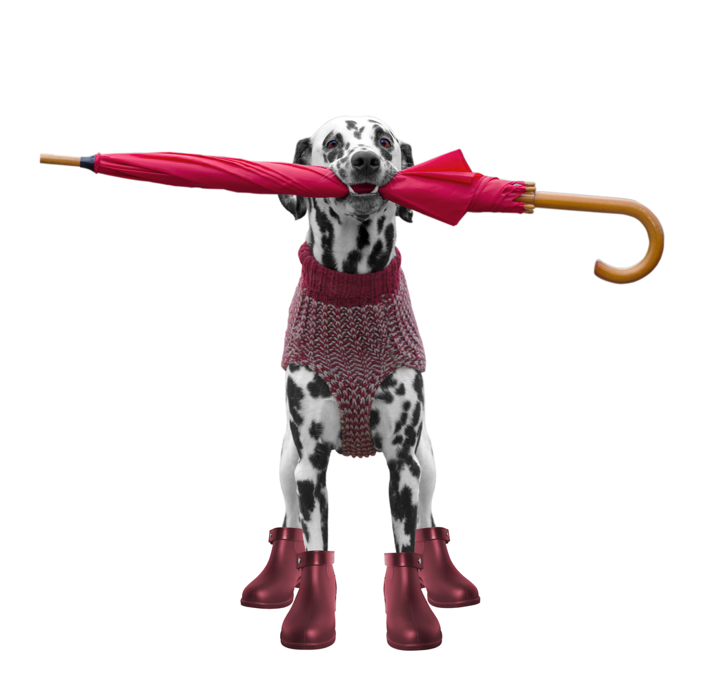 dog with an umbrella going for a walk